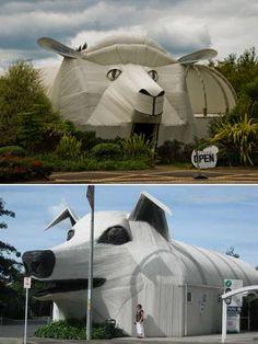 Sheep and sheepdog buildings, New Zealand.