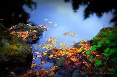 Fallen leaves, Mount Ephraim, Kent.