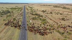 2,068 Aerial View Of The Australian Outback Stock Photos, Pictures & Royalty-Free Images - iStock Australian Desert, Aerial View, Dream Life, Royalty Free Images, Country Roads, Stock Photos, Pictures, Outdoor, Photos