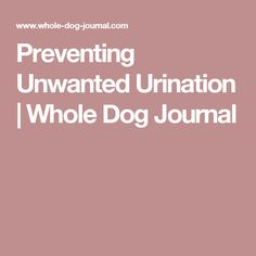 Preventing Unwanted Urination | Whole Dog Journal
