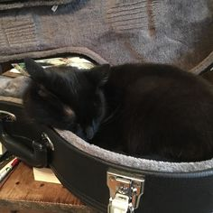 Front row seats for the show. We have #musiccats who traipse down when they hear us #tuningup and then crawl into our instrument cases and fall asleep. #bestlifeever #nashvillesongwriters #gettingreadyforashow