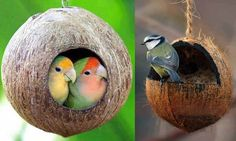 Save Our Green » How to make bird house using Coconut Shell?