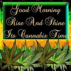 Morning Rose, Happy Morning, Good Morning Greetings, Cannabis, Happy 420 Day, Trippy Quotes, Weed Facts, Wake And Bake, Ganja