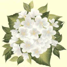 FLORES=figuras de decoupage 8 - Mary. XVIII - Álbumes web de Picasa