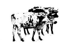Crowding - Nguni Canvas Prints