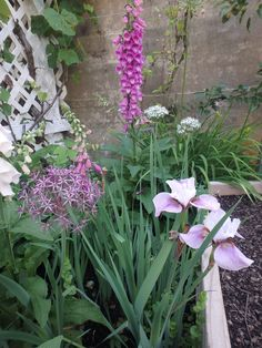 2014 Mid-June, Foxglove and Augery Iris