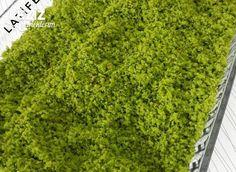 Yalancı Antep Fıstığı Tozu Food And Drink, Herbs, Vegetables, Cakes, Pistachio, Food, Veggies, Mudpie, Herb