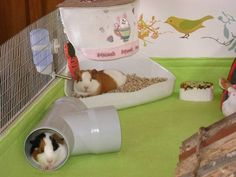 PVC Tube is a good idea ... love how the pig in the back is logging in the food bowl