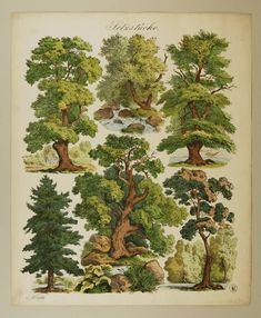 Gravure Illustration, Art And Illustration, Illustrations, Botanical Drawings, Botanical Prints, Arte Grunge, Arte Peculiar, Wall Prints, Poster Prints