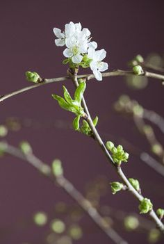 Dandelion, Trays, Vases, Green, Flowers, Plants, Dandelions, Plant, Taraxacum Officinale