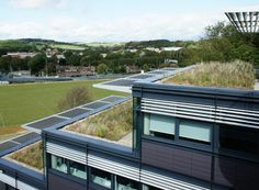 wildflower and sedum roof UK