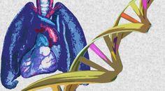 16 mejores imgenes de Enfermedades Respiratorias en 2019  Artculos Celulas y Comida
