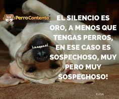 EL SILENCIO ES ORO, A MENOS QUE TENGAS PERROS, EN ESE CASO ES SOSPECHOSO, MUY PERO MUY SOSPECHOSO!