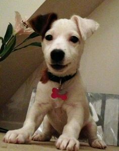 Poppy the Terrier mix....The Daily Puppy 12-6-12