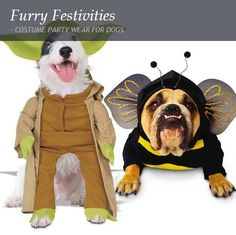 COSTUME PARTY WEAR FOR DOGS. We all know that dogs enjoy the festive season as much or even more so than we do, so why not make your precious pooch or pooches the centre of attention with these adorable dress-up costumes. Let Fluffy live out his Star War fantasies in a Yoda outfit or give Spot the opportunity to be ring bearer at your wedding, in a debonair tuxedo. www.citymob.co.za