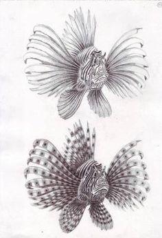 red lionfish realistiv pencil drawing  http://zabardastblogg.blogspot.com/2013/03/amazing-pencil-art.html