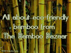 All about eco-friendly bamboo from The Bamboo Bazaar Natural Bedding, Eco Friendly, Bamboo, Blog, Blogging