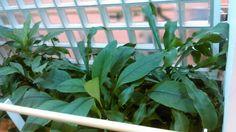 Wilhelmiina kuntoutusalue istutusallas 2 kasvit