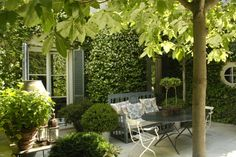 vine covered walls, topiaries & deciduous, small trees come together beautifully in this compact yard