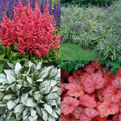 Planting a Shade Garden? From left to right clockwise Astilbe Fireberry Lilyturf Lungwort Coral Bells. Shade Flowers, Fall Flowers, Outdoor Plants, Outdoor Gardens, Beautiful Gardens, Beautiful Flowers, Shade Garden Plants, Coral Bells, Plant Pictures