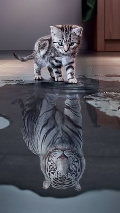 Free Kitten Wallpaper For Your Phone Baby Animals Super Cute, Cute Little Animals, Cute Funny Animals, Cute Cat Wallpaper, Animal Wallpaper, Jaguar Wallpaper, Cute Kittens, Cats And Kittens, Beautiful Cats