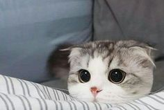 Think maybe you can calls? Im gonna be homes alone all day Cute Cat Memes, Funny Cute Cats, Cute Funny Animals, Cute Baby Animals, Kittens And Puppies, Cute Cats And Kittens, Kittens Cutest, Pretty Cats, Beautiful Cats