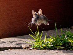 """Foto tirada por John Cocks, elogiada na categoria """"vida selvagem no jardim"""": http://abr.io/7lqB"""