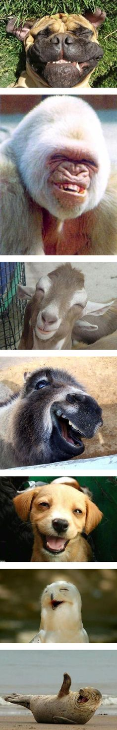 Sometimes you just need to have a good laugh! #animals