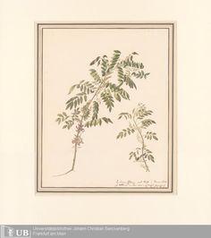 Indigo - Louise von Panhuys