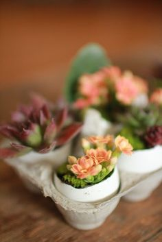 what a great way to start seedlings, the egg shell can be planted right in the new soil to add nutrients.