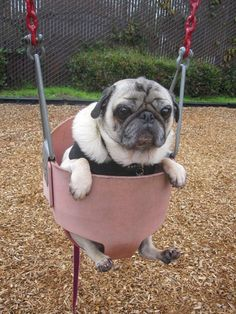 …because you dog is your child. | 19 Signs You Are A Crazy Dog Person #Pug