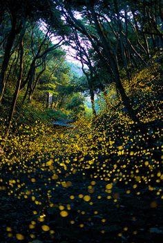 """ Hotaru no mori""( Fireflies Forest,Japan) by Masahisa UEMURA"