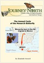 Life in Monarch Butterfly Region of Mexico (Videos, photos, Spanish)