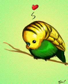 Budgie  by *ninjaink