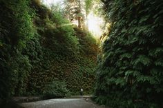 Have you ever walked through a fern-covered canyon? 🌱🌿 This short and gorgeous trail is located in the California Redwoods - check out our website for all the details on how to get here and what to expect! TheMandagies.com Pacific Northwest Travel Inspiration and Photography