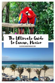 The Ultimate Guide to Cancun, Mexico including what to see, do and where to stay blueskiesandopenroads
