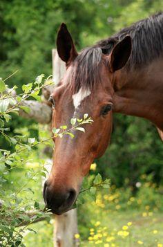 She loves horses :)