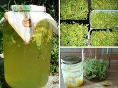 Lípová limonáda: voňavá, chutná a velmi zdravá – ideální pro horké letní dny Home Canning, Compost, Aloe Vera, Cooking Recipes, Drinks, Aspirin, Bathroom Cleaning Tips, Drinking, Beverages