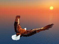 eagle above the sea /    Adler fliegt der Sonne entgegen...