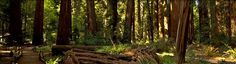 Richardson Grove State Park | Travel | Vacation Ideas | Road Trip | Places to Visit | Garberville | CA | Place of Worship | Nature Reserve