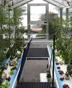 Urban Farm Unit: a shipping container converted to greenhouse. Inside each greenhouse is a hydroponic watering system and a metal staircase to the upper level. On the lower level, a fish pond and cleaning tank make it possible to fertilize and recycle water while growing food on the upper level.