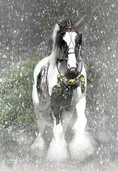 horse & snow