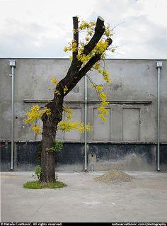 Tree - Drvo - Nataša Cvetković Photography