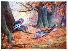 archibald thorburn wood pigeon on beech mast painting & archibald thorburn wood pigeon on beech mast paintings for sale Oil Painting Gallery, Oil Painting For Sale, Paintings For Sale, Art Gallery, Wood Pigeon, Most Famous Paintings, Autumn Scenes, Pre Raphaelite, Fall Pictures