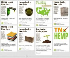 Wondering what all the fuss is about hemp? Hemp looks like this!