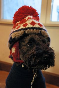 """""""It's that time of year when mom knits, and knits!"""" #dogs #pets #ScottishTerriers Facebook.com/sodoggonefunny"""