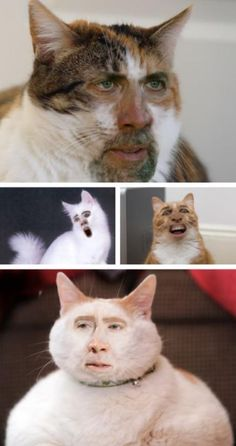 27 Ideas For Funny Face Swaps Nicolas Cage Stupid Funny Memes, Funny Shit, Hilarious, Funny Humor, Funny Stuff, Scary Funny, Nicolas Cage, Animal Memes, Funny Animals