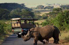 Richards Bay Shore Excursion: Hluhluwe Safari