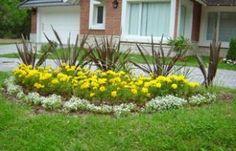 Armando tu jardín: plantas de sol   Diseño Jardin   Flor de Planta