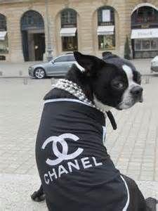 chanel boston terrier